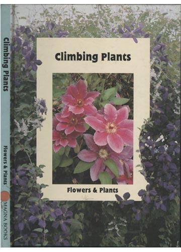 Climbing Plants - Flowers & Plants