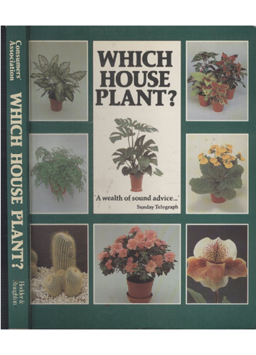 Wich House Plant